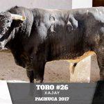 Toro 26