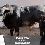 Toro 49