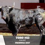 Toro 53
