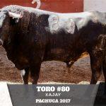 Toro 80